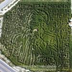 corn-maze2