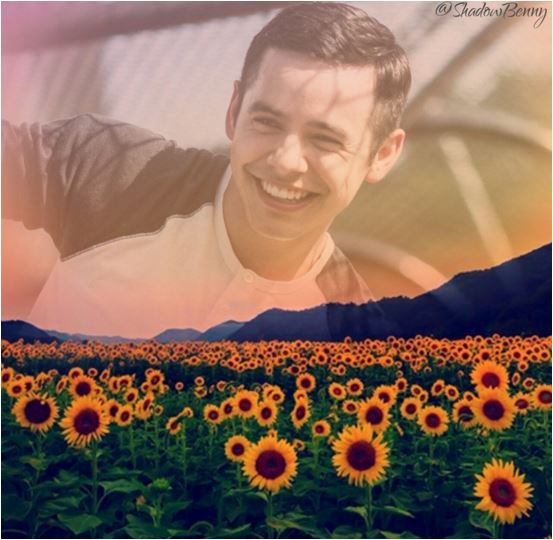 Shanelle sunflowers edit also cred the os