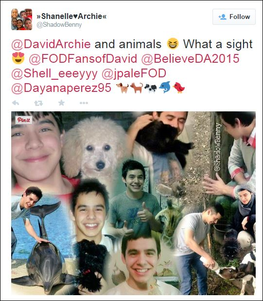 david animals shannelle
