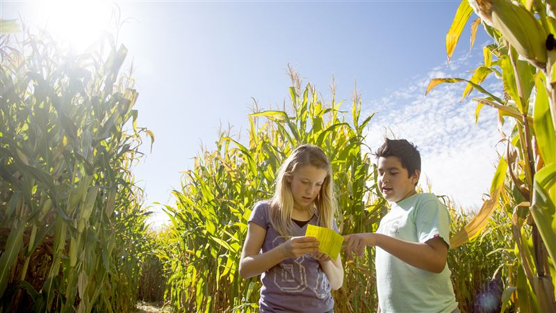 standard examiner photo Serenity Castorand Diego Alberto The Corn Maize UT